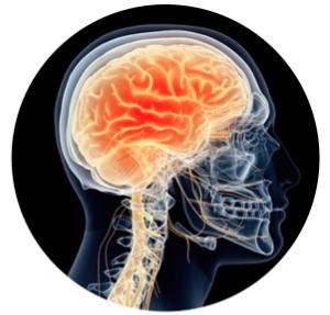 Clinical Neuroanatomy Module